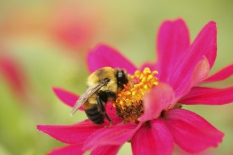 bees_4